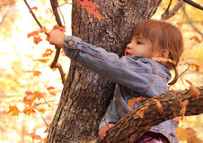 Young Girl Playing in Tree. A young girl reaching for leaf in a tree with autumn leaf colors Royalty Free Stock Photo
