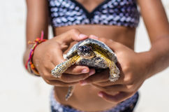 Young girl playing with turtle in hand on tropical sandy beach. Young girl in patterned swimsuit playing with turtle in hand against the background of tropical stock photos
