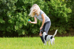 Young girl plays with a dog Royalty Free Stock Photos