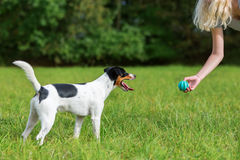 Young girl plays with a dog Stock Images