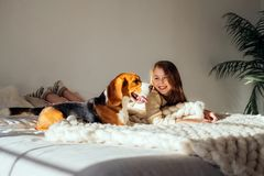 Young girl plays with her dog on the bed. Beagle and girl laugh together. Funny dog and pretty caucasian girl. Have fun in bedroom stock photo