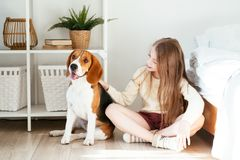 Young girl plays with her dog near the bed. Beagle and girl laugh together stock photos