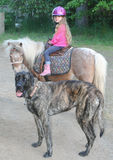 Young girl on pony with giant Mastiff dog Royalty Free Stock Images
