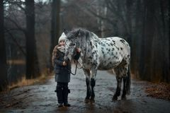 Young girl portrait with Appaloosa horse and Dalmatian dogs stock image
