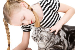Young girl posing with british shorthair cat Royalty Free Stock Images