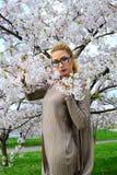 Young girl posing in the sakura garden Stock Photography