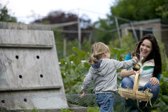 A young girl pulling up onions on an allotment Stock Photo
