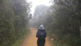 Young girl in raincoat going on wood trail during travel. Hiking woman with backpack walking in tropical wet forest stock video footage