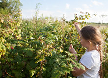 Young girl and raspberries. Young girl eat raspberries in sunny garden royalty free stock images