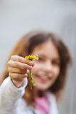 Young girl reaches wildflowers Royalty Free Stock Photography