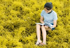 Young girl reading in gold meadow contryside nature in evening l. Ight vintage style Royalty Free Stock Images