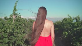 A young girl in a red dress is walking through the vineyard. A free girl with long hair walks through the vineyard.