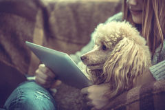 Young girl is resting with a dog and using tablet . Young girl is resting with a dog on the armchair at home and using tablet royalty free stock photos