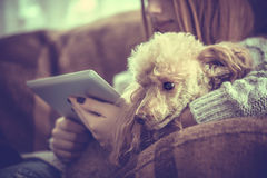 Young girl is resting with a dog and using tablet . Young girl is resting with a dog on the armchair at home and using tablet stock images