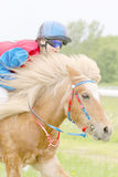 Young girl riding a brown rapid pony Royalty Free Stock Image