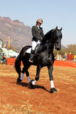 Young girl riding lovely black Friesian horse. Royalty Free Stock Images