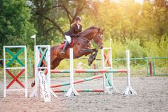 Young girl riding sorrel horse on show jumping. Competition Stock Photos