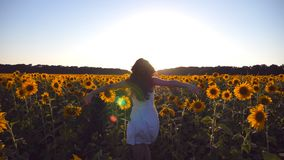 Young girl running along sunflowers field under blue sky at sunset. Sun shine at background. Follow to woman jogging at. Meadow and enjoying freedom. Rear back stock footage