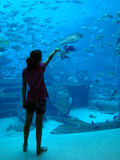 Young Girl showing fish. Indoor Aquarium royalty free stock photography