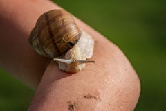 Young girl showing a snail. On her arm Royalty Free Stock Photography