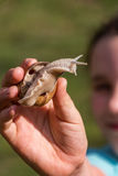 Young girl showing a snail. In her palm Stock Photo