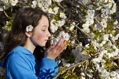 Young Girl smelling Cherry Blossoms Stock Photography