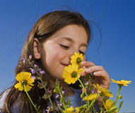 Young girl smelling flowers. Young girl smelling yellow wild flowers Royalty Free Stock Images