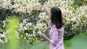 Young girl smelling little white flowers tree. A young girl in a pink sweater and a bright scarf at the neck, smelling little white flowers tree aleurites stock video