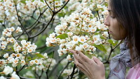 Young girl smelling little white flowers tree. A young girl in a pink sweater and a bright scarf at the neck, smelling little white flowers tree aleurites stock video footage