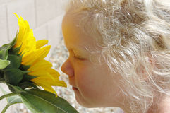 Young Girl Smelling Sunflower. Photo of a young girl smelling a blooming sunflower in the warm spring sunshine Royalty Free Stock Image