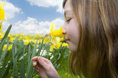 Young girl smelling yellow daffodil Stock Images