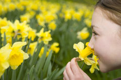 Young girl smelling yellow daffodils Royalty Free Stock Photography