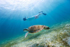 Young girl snorkeling with sea turtle. Underwater photo of young woman snorkeling and swimming with Hawksbill sea turtle royalty free stock photo