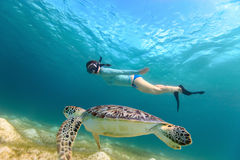 Young girl snorkeling with sea turtle. Underwater photo of young woman snorkeling and swimming with Hawksbill sea turtle stock photography