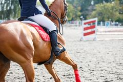 Young girl on sorrel horse galloping on her course. On show jumping competition. Image with copy space royalty free stock images