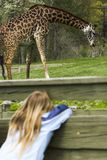 Young girl spying a giraffe. Through a fence Royalty Free Stock Image