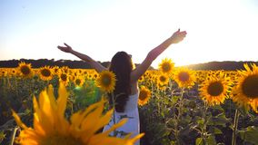 Young girl standing at the field of sunflowers and raising her hands up. Woman enjoy by landscape and freedom at the. Meadow. Rear back view Slow motion Close stock footage