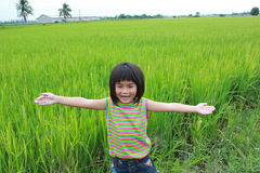 Young girl standing in the rice field. Royalty Free Stock Image