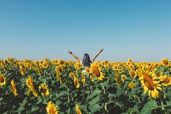 Young Girl Standing In Sunflowers And Raising Hands Up, Rear View. Freedom Lifestyle Journey Concept. Young beautiful girl in sunglasses stands in field with stock photo