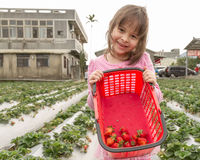 Young Girl at a Strawberry Farm stock photos