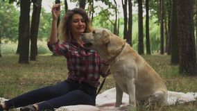 Young girl strokes Labrador in the forest stock footage