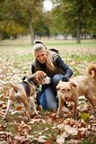 Young girl stroking dogs in autumn park. Attractive blonde girl stroking dogs in autumn park, smiling Stock Photo