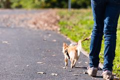 Young girl take the dog for walkies Royalty Free Stock Photos