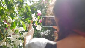 Young Girl Taking Photo of Beautiful Pink Flowers on the Tree. Amazing Rain and Lens Flare Effect. Slowmotion HD stock video