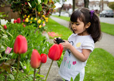 Young girl taking a picture of spring tulips. Young photographer reviewing picture of spring flowers on back of camera Stock Photo