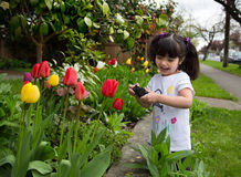 Young girl taking a picture of tulips. Happy young girl laughing as she captures a photo of spring flowers Stock Images