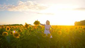 Young girl taking pictures in a field of sunflowers phone, photo phone girl online. stock video