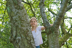 Young girl in a tree Stock Photography