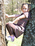 Young Girl in a Tree. A cute young girl with ponytails playing between two trees. 7 years old stock photo