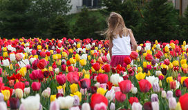 Young Girl and Tulips Royalty Free Stock Photography
